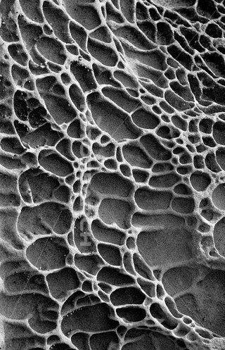 Textura natural: rocas. La textura que se ve en la imagen tiene figuras redondas y ovaladas. Esto se puede utilizar como inspiración para alguna estructura. Se nota que posee una textura áspera, y hueca.