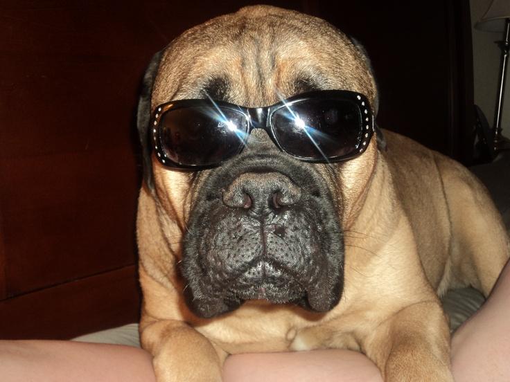 Best Pet Insurance For Dogs Ireland