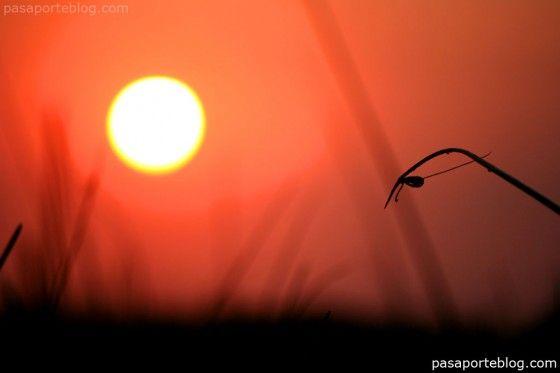 Puesta de sol en el Delta del Okavango, el delta interior más grande del planeta y  posiblemente el mas espectacular.
