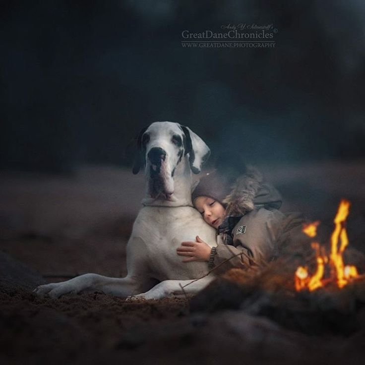 Andy Seliverstoff Takes Photos of 'Little Kids and Their Big Dogs' | Omeleto