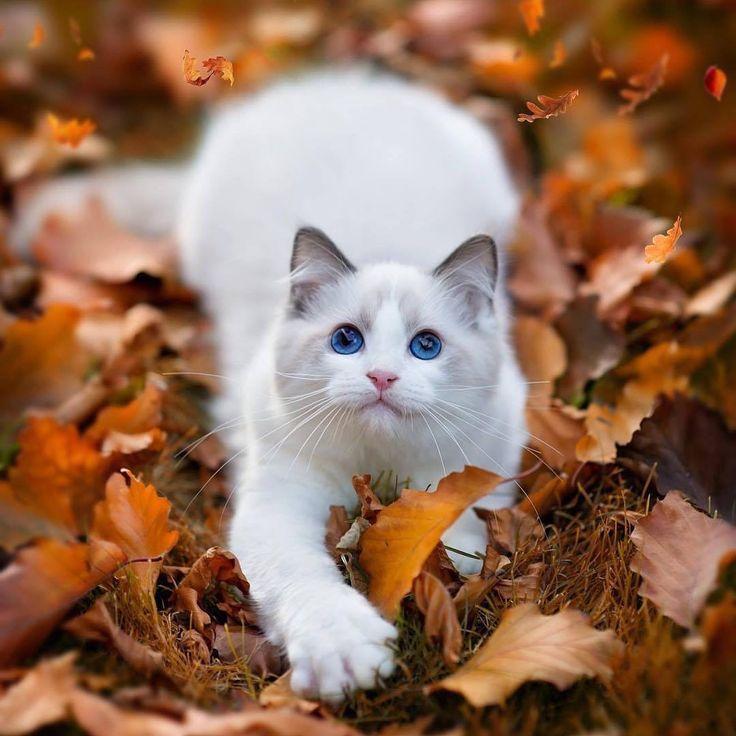 beautiful Cat http://ift.tt/2f9bi5Y