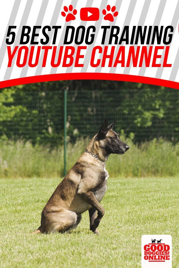 5 Best Dog Training Youtube Channels Best Dog Training Dog