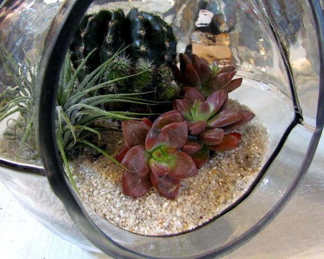 Succulent terrarium <3