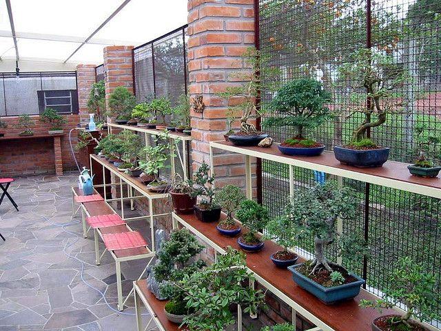 A friend's bonsai nursery. I wish having his dedication and knowledge!