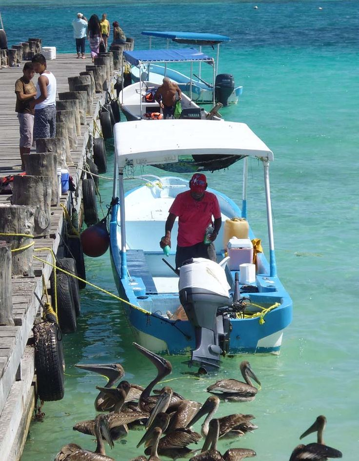 Pelicans coming to inspect a fishing boat at Puerto Morelos, Mexico. They loved their fish!