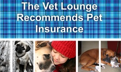 The Vet Lounge recommends pet insurance to protect your pet and yourself.