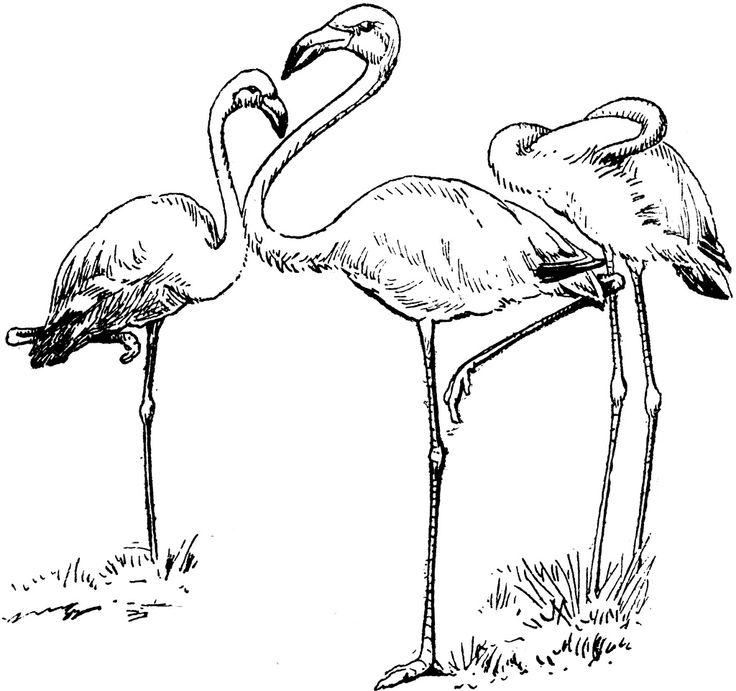 **FREE ViNTaGE DiGiTaL STaMPS**: FREE Digital Stamp - Flamingos