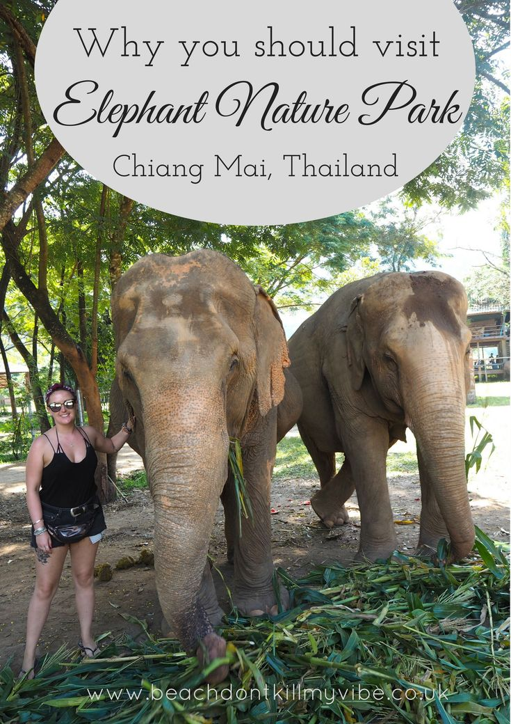 Learn more about why you should be careful visiting animal parks in Asia - Elephant Nature Park in Chiang Mai is leading the way in looking after the animals properly!  #thailand #elephantnaturepark #backpacking #asia #solotravel #animalfriendly