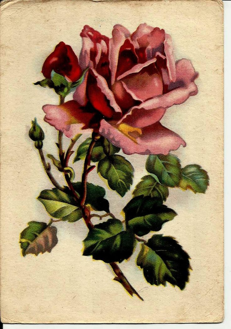 Rose Flower, Vintage Russian Postcard with Mark print 1962 by LucyMarket on Etsy