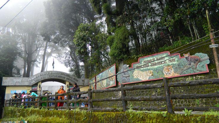 Zoological Park ... Named After Padmaja Naidu (Daughter of Sarojini Naidu)... Largest High altitude zoo in India... #zoo #park #sarojini #naidu #padmaja #largest #Darjeeling #India #HolidayPlans