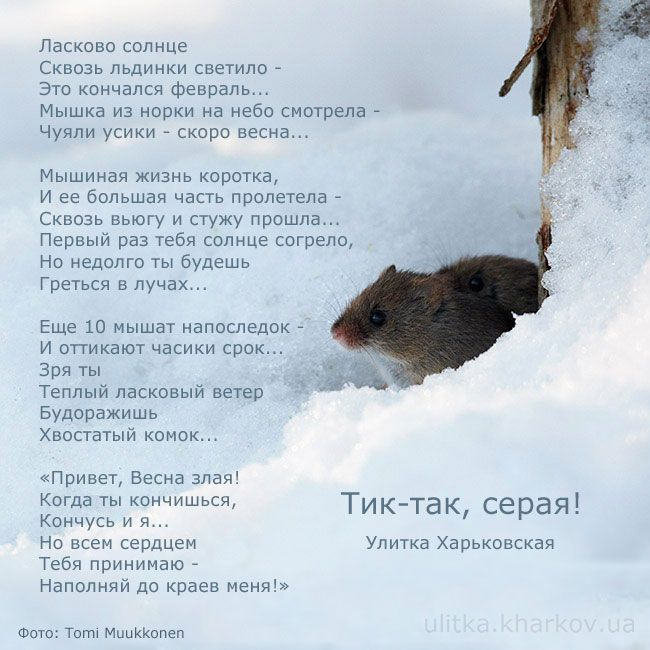 Немного грустное стихотворение о мышке и весне