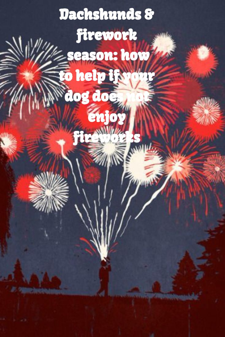How do you know if your dachshund is scared of fireworks? The signs of fear will depend to some extent on your dog's personality and the degree to which they are bothered by the noise.  Getting your dog used to unfamiliar noises in advance is recommended by all dog welfare organisations.  The Dogs Trust has some excellent free downloads and accompanying how-to-guides. Read on to see Barkmatic's roundup of the tips offered by dog welfare organisations.