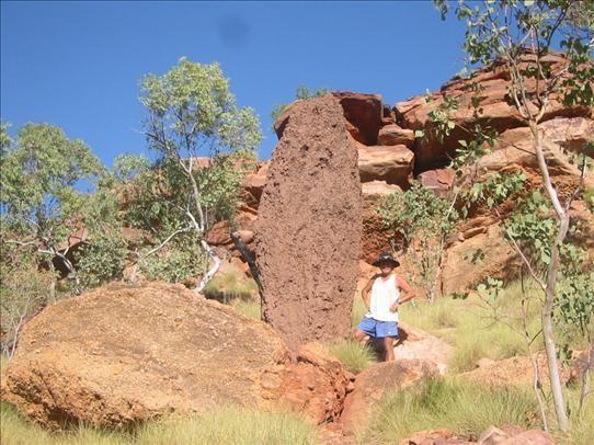 Terminte mound in Darwin, Australia