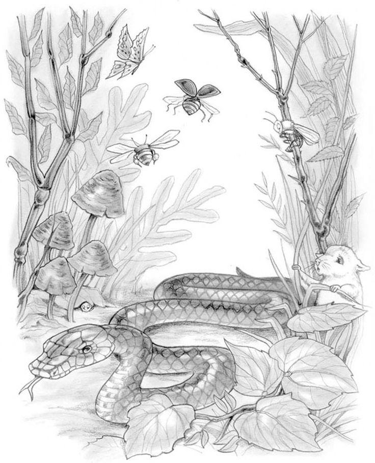 Animal scene. #chantelle #burgen #chantelleburgen #childrensbook #childrens #illustration #illustrator #publish #education #kidlitart