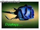 http://zdjecia.nurka.pl/url/swiat-obrazkow.pl-obrazy-3-288-dziekuje-niebieska-roza.jpg.html