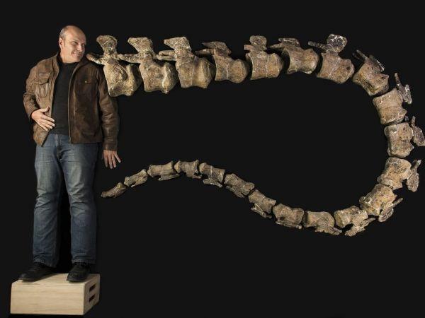 地上動物で最重量の大型竜脚類「ドレッドノータス・シュラニ(Dreadnoughtus schrani)」。脊椎骨(せきついこつ)の化石22点で再現された尾と、発見者のケン・ラコバラ(Ken Lacovara)氏。ほかにも10点の化石を採集している。PHOTOGRAPH BY ROBERT CLARK / EXCEL MAGAZINE / DREXEL