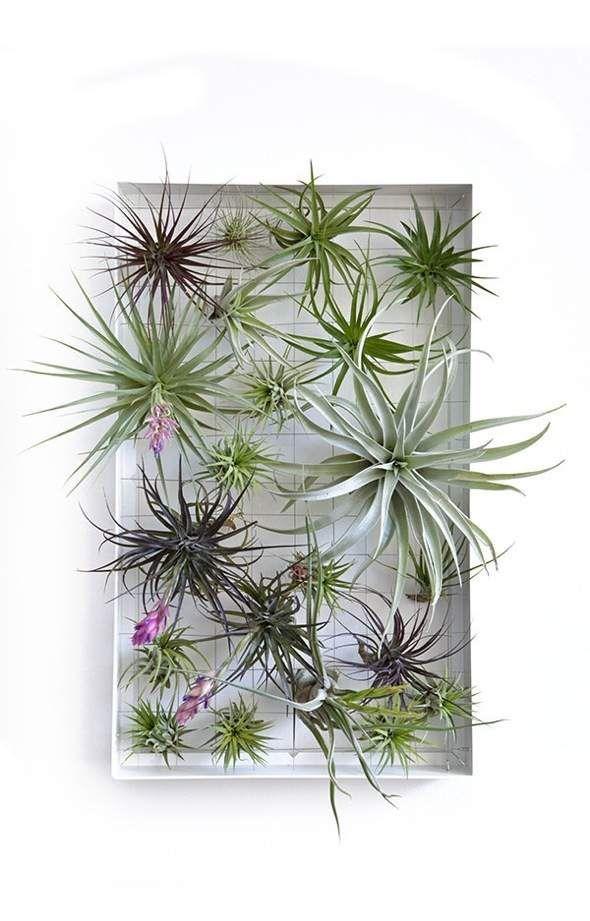 17 meilleures id es propos de plantes a riennes sur for Recherche sur les plantes vertes