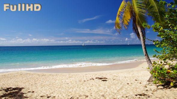 Caribbean Beach with Palm video footage by cinema4design on videohive, tropical beach, sandy beach, Madinina, Martinique, Caraibes