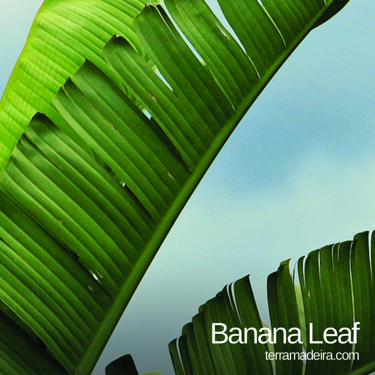 Banana Leaf, discover their use at http://bit.ly/1hJ0rLO #terramadeira #banana