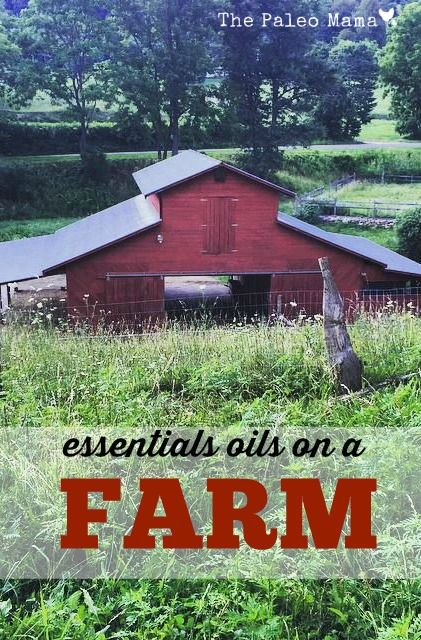 Using essential oils on a farm is an effective and natural solution! You won't believe how easy it is to use essentials oils on your farm animals http://thepaleomama.com/2015/07/essential-oils-on-a-farm/