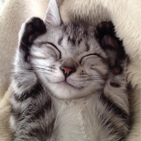 Top 14 des chats qui sourient à la vie, le top qui fait du bien