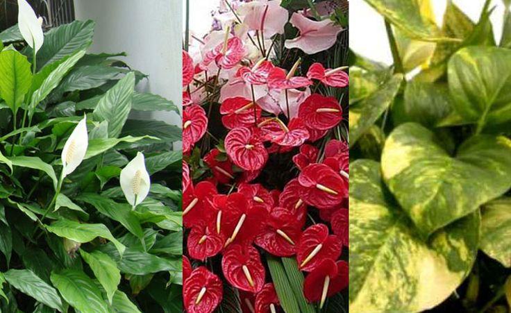 Conheça onze plantas que crescem mesmo sob a sombra