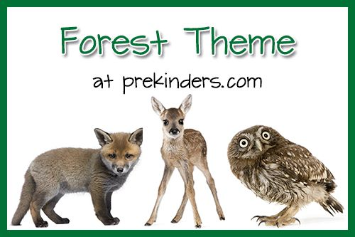 bear themed math for kindergarten | Forest Theme for Preschool