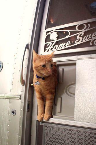 a different kind of cat door & 86 best Kitties at the Door images on Pinterest | Animals Cats ... Pezcame.Com