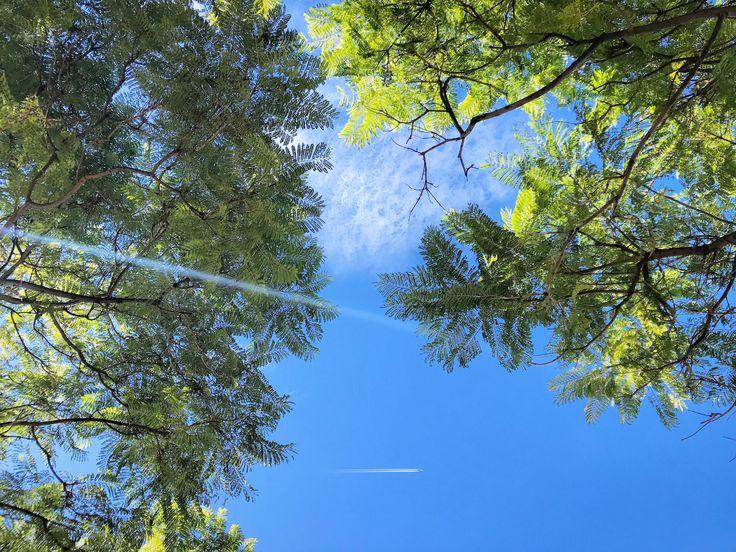 Por La Tarde 🇪🇸👬☀️✈️ #tarde #parque #cabecera #sky #arbol #lines #avion #green #cool #photo #life #photography #valencia #goodpic #photographer #photooftheafternoon #socialnetwork #pinterest #instagram #tumblr #twitter #life #peace #silence #quotes #foodporn #follow4follow #love #newlife