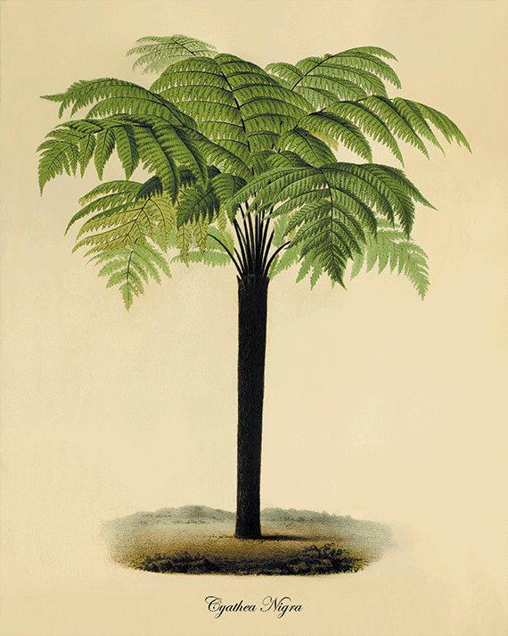 Palm tree art print antique botanical art prints home for Victorian garden walls designs