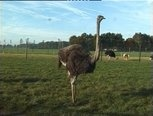 Veilig leren lezen - kern 6  Van ei tot struisvogel