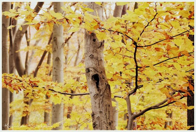 Autumn Wood Yellow Trees Forest
