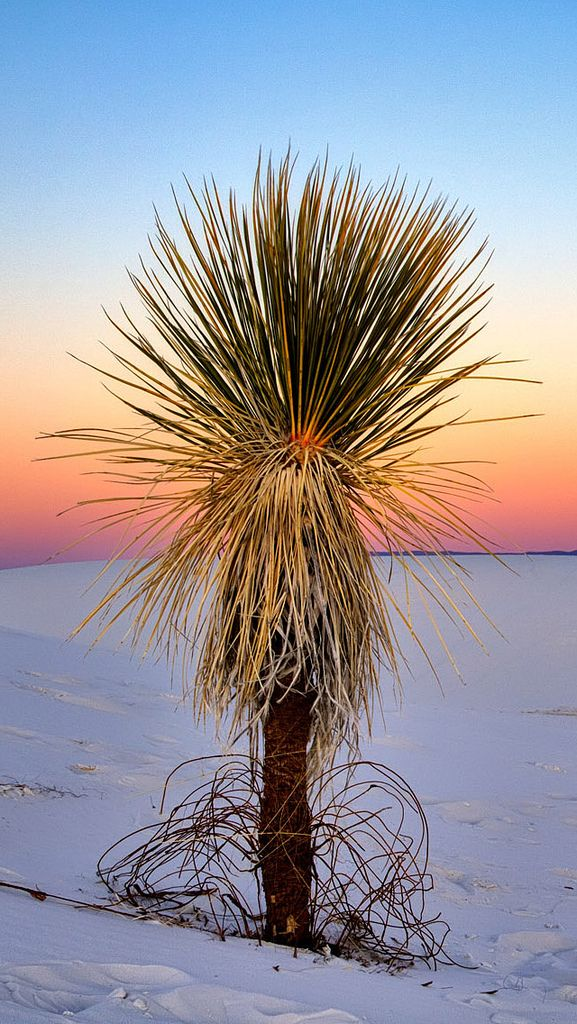 Stunning iPhone 5 background - White Sands National Monument, New Mexico | by xoque