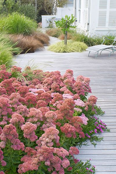 Great use of plants to break up the edges of this deck. The combination of Sedum spectible and the grasses creates a real softness to the planting scheme. Pinned by Janna Schreier