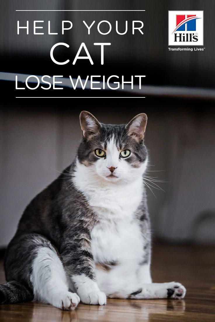 ddc065887731dbaaa71b54a1ddbebf4b - How To Get My House Cat To Lose Weight