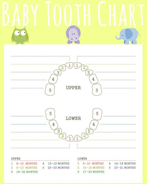 Free Printable Teething Chart, Baby Tooth Chart, Teething chart for babies, printable teething chart, infant teething chart