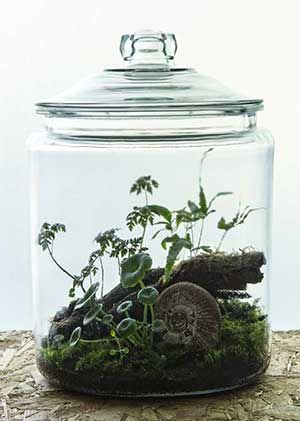 'Darwin' Apothecary style jar with Jurassic era ammonite. Hermetica London