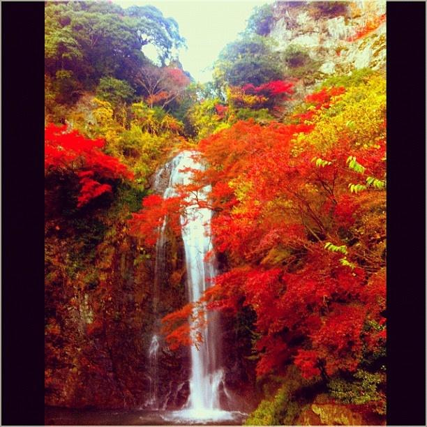 #大阪 #箕面 #紅葉 #箕面の滝 #滝 たきーー\(^o^)/ - @sunagawaaaaa- #webstagram