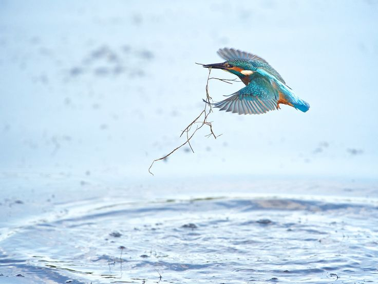 Kingfisher fishing by Erik Veldkamp / 500px