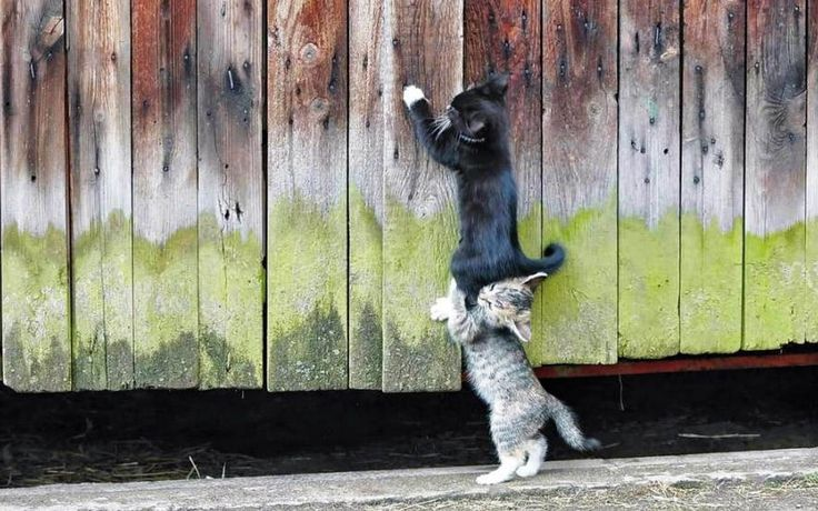 Cute Kittens Images Hd  The Cutest Kittens 1920×1080 Funny Kitten Pictures | Adorable Wallpapers