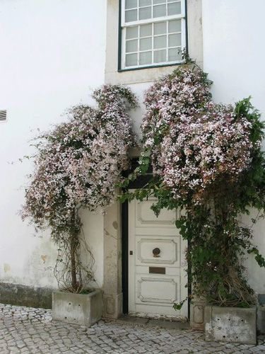 Such a cute door. Could look like it was taken in Italy.