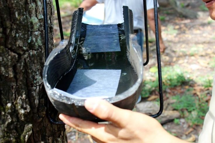 This Low-Tech Trap For Killing Mosquito Eggs Is Brilliant(9-4-16)