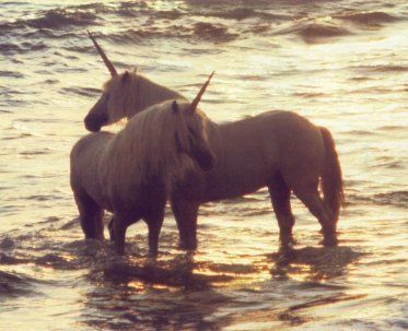 .hey crys look real unicorns