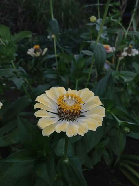 at my  grandmas home #capture#some#beautiful#flowers