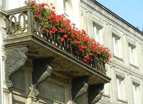 Oltre 25 fantastiche idee su piante da balcone su pinterest giardino sul balcone cortile - Piante sempreverdi da terrazzo in pieno sole ...