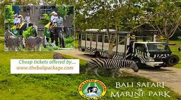 Bali safari marine park cheap tickets