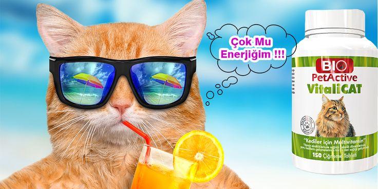 Kedi Vitaminleri