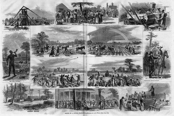 Variety of scenes on a cotton plantation. This soon became the way of life for many slaves in America, as cotton plantations and production grew exponentially in the late 1700's and early 1800's.  Slaves were forced to work long hours with hard labor under meager food supply and miserable living conditions. Source: columbia.edu