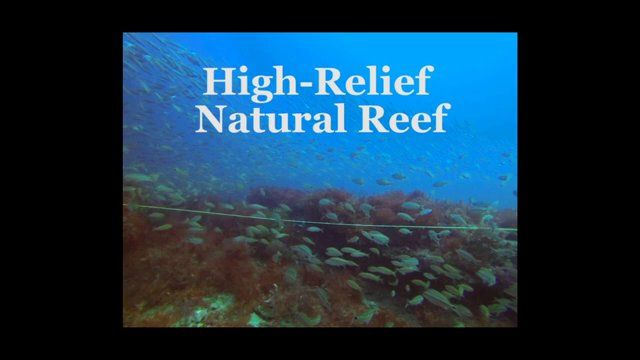 Videos and photographs taken by Avery Paxton, Alyssa Adler, and Emily Pickering while surveying hard-bottom habitat on the continental shelf of North Carolina. This research was supported by funding from a North Carolina Coastal Recreational Fishing License Grant.
