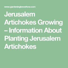 Jerusalem Artichokes Growing – Information About Planting Jerusalem Artichokes